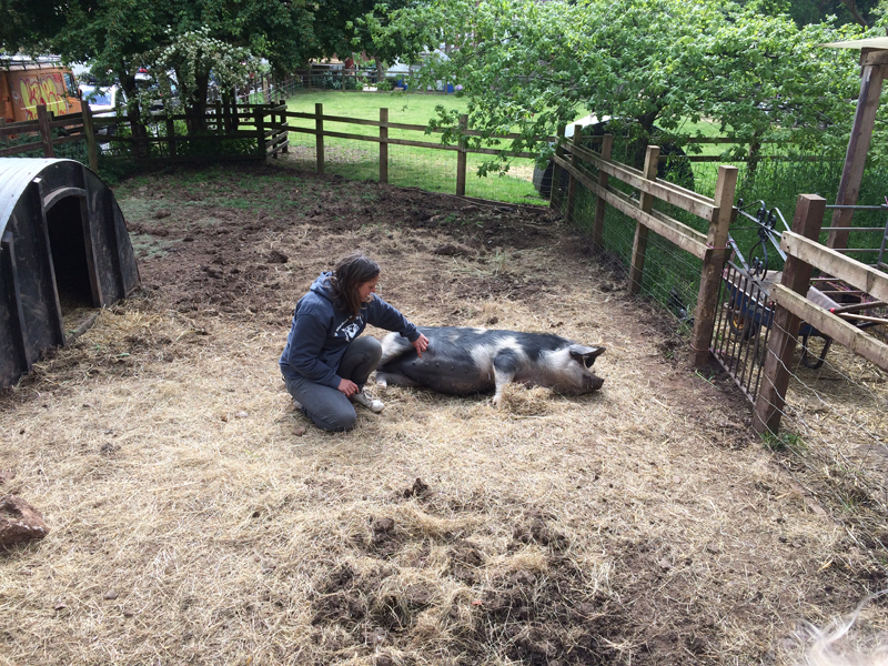 Meeting Tuppence the pig